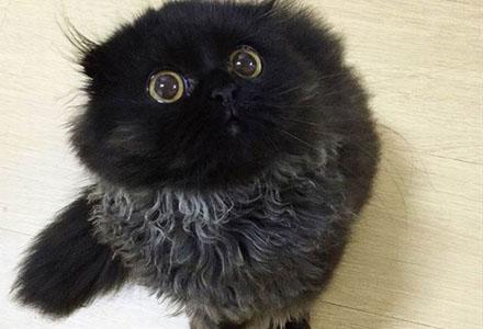这眼睛是用圆规画出来的吧?韩国大眼萌猫网络走红