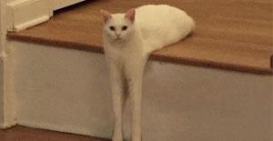 爆笑囧图:天呐,台阶上有个妖怪!