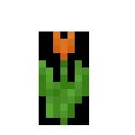 橙色郁金香