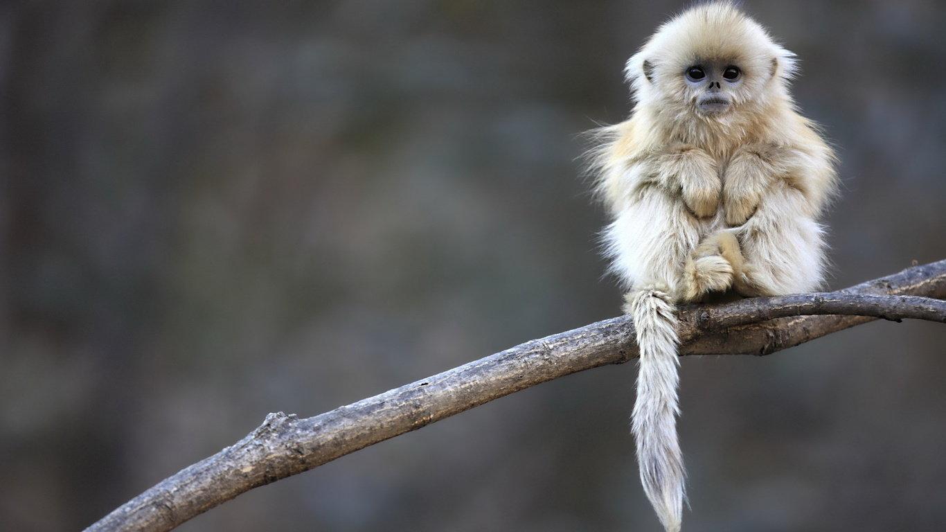 可爱的野生动物-趣味世界-一起一起上