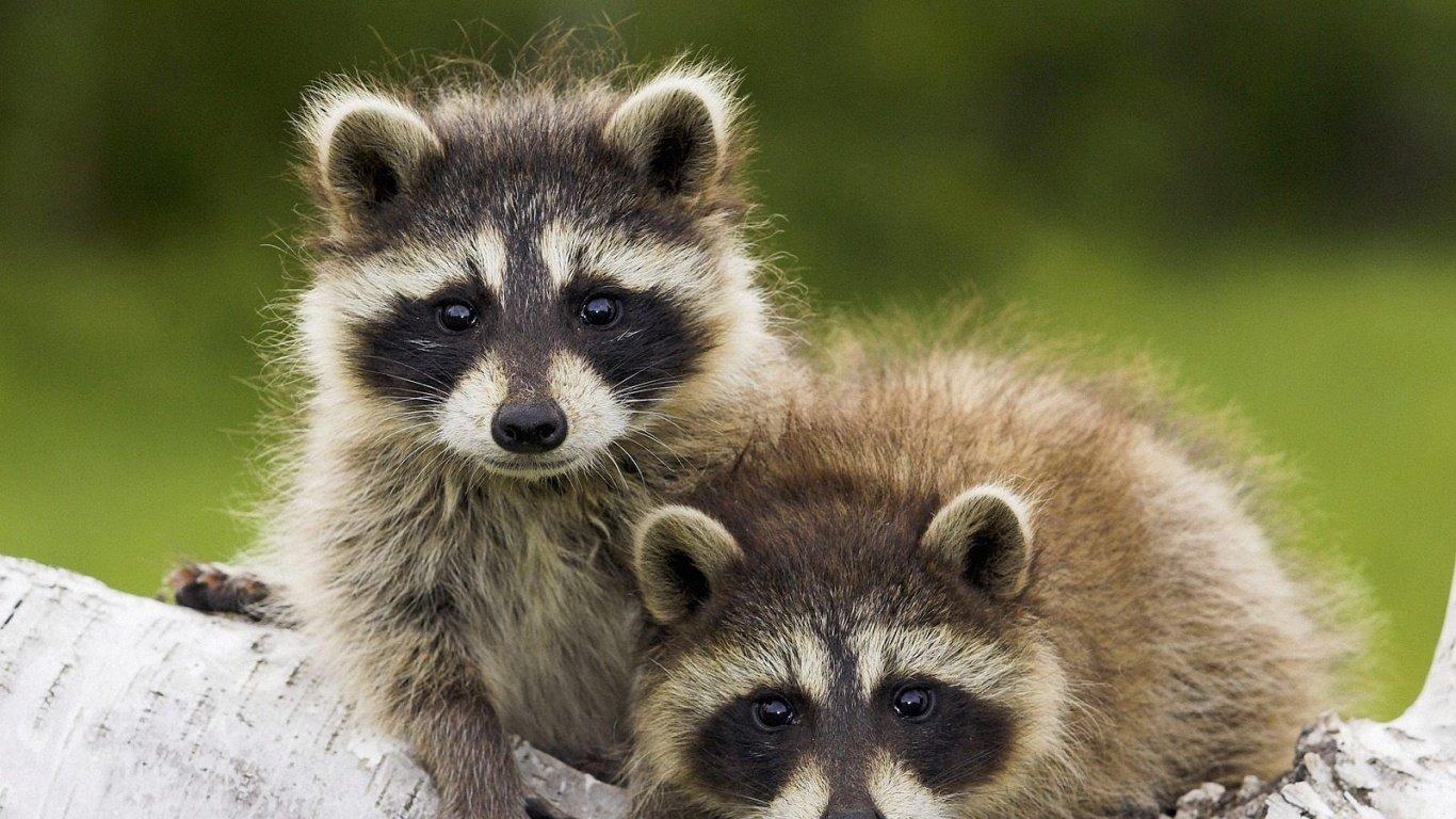 可爱的野生动物