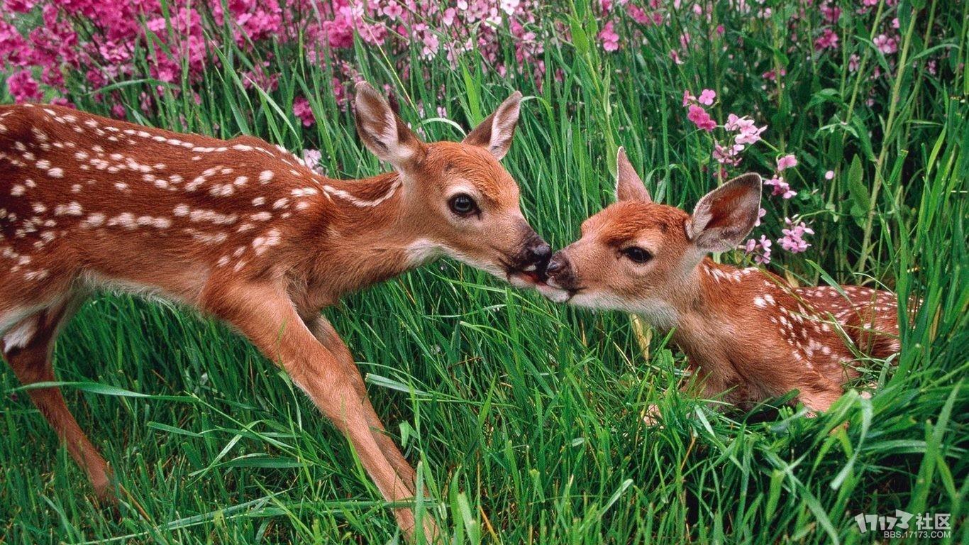 可爱的梅花鹿-图文沙龙-一起一起上