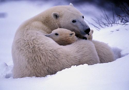 那些生存在极寒之地的可爱生灵们