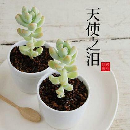 小清新多肉植物,你认识几个?