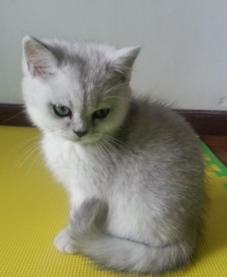 可爱猫咪犯困头像