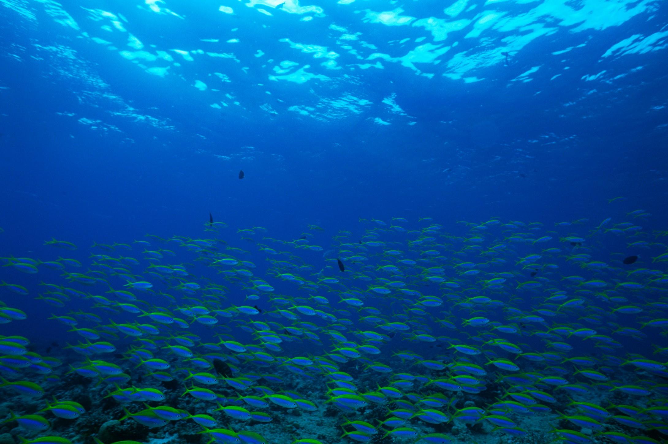 design 船图片简笔画大图图片展示_船图片简笔画大图相关  深海海底