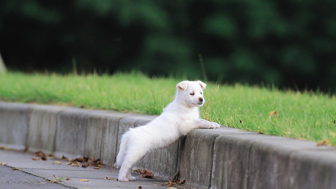 动物旅行2 人类的好朋友小狗