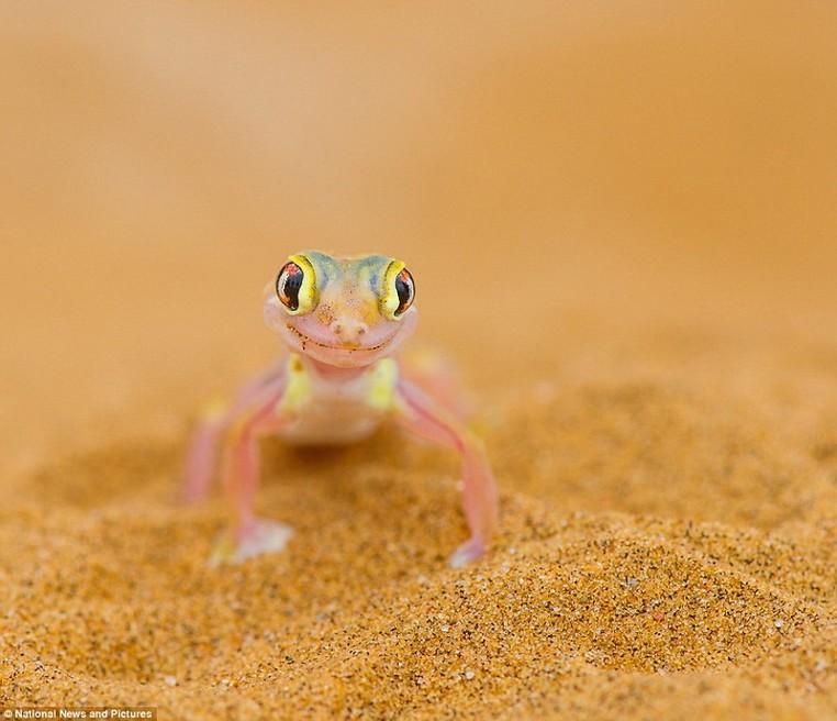 大自然的秘密 野生动物摄影大赛获奖作品