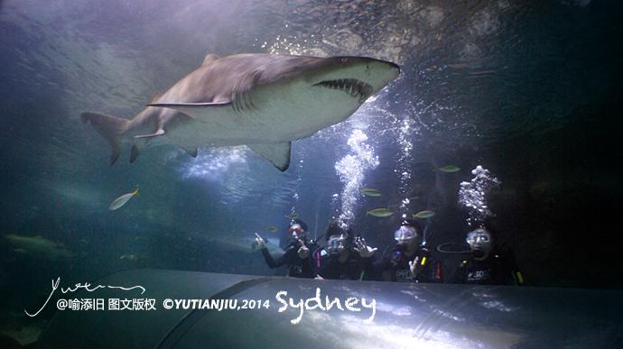 曼利海洋生物水族馆 贴身近触大白鲨