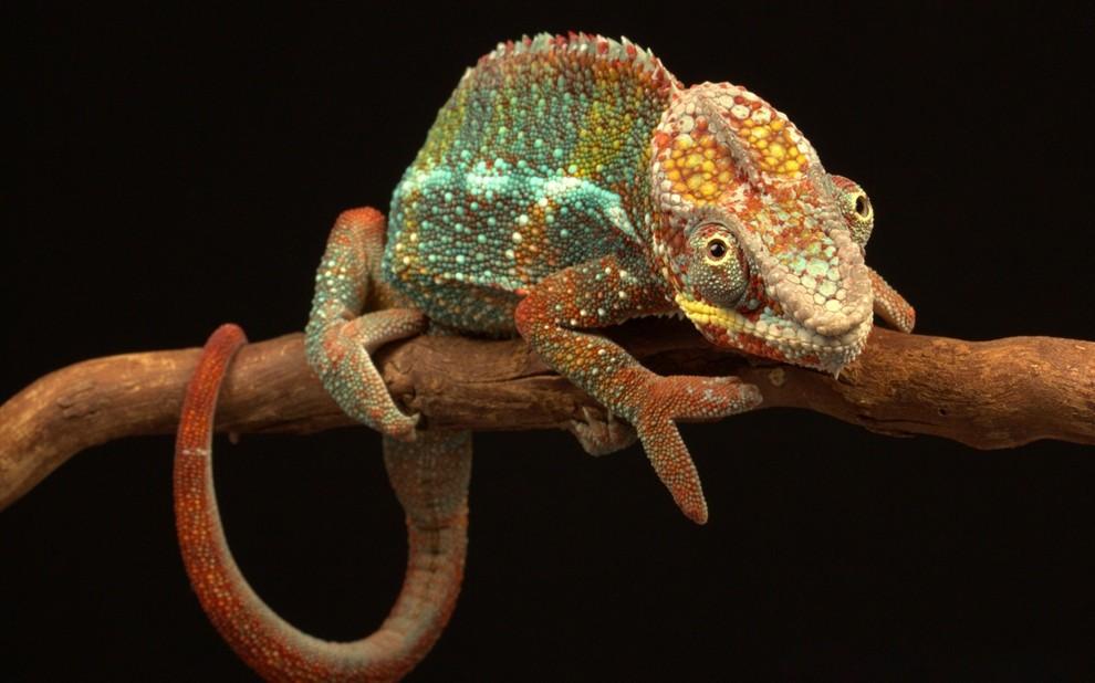 静观生灵之灵:顶级野生动物摄影作品-趣味世界-一起一