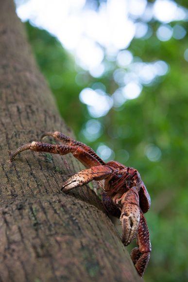 这一种陆地上最大的节肢动物包括了蟹类和蜘蛛.