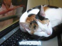 让游戏玩家抓狂的猫图集