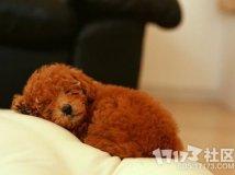 狗狗喜欢往床上爬怎么办?