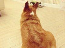 让狗狗毛发有光泽的小方法