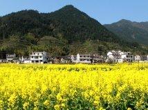 天上人间----中国最美的乡村婺源