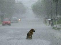 狗的感人故事图片,你能忍到第几张不哭?