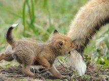 """""""爸爸你去哪儿""""千万不要丢下我!"""