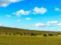 内蒙 策马奔腾在克列部草原上