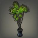龙血树盆栽