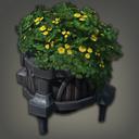 水八角盆栽