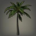 海岛棕榈树