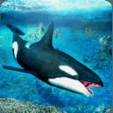 杀人鲸攻击3D